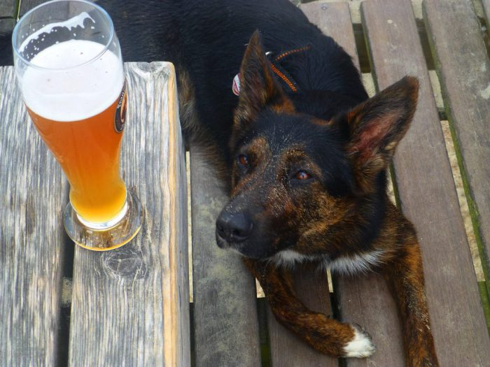 Attract customers with four-legged companions to dog-friendly pubs